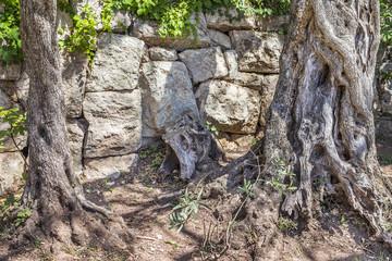 закрученные деревья в камнях