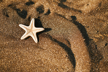starfish on black sand beach