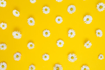 Floral pattern of white chamomile daisy flowers on yellow background. Flat lay, top view. Floral...