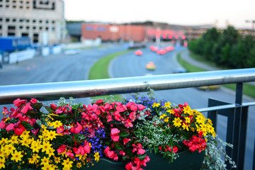 City flowers and blurred street with traffic, urban space