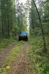 Jeep in the forest