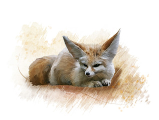 Fennec Fox watercolor