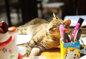 Cat sleep on the table under sunshine