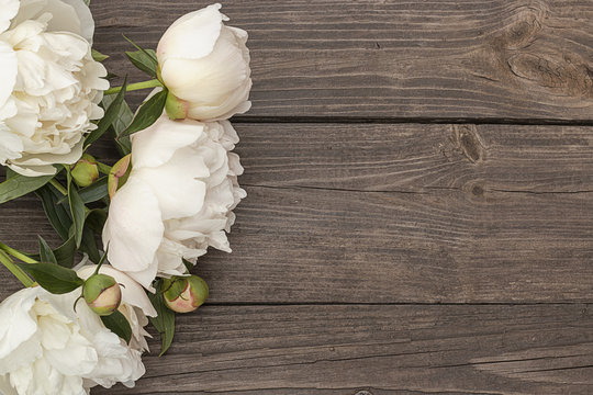 White peony on wooden background