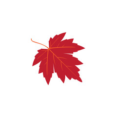 red maple autum leaf