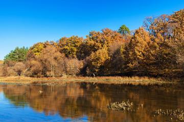Autumn trees along a calm river.