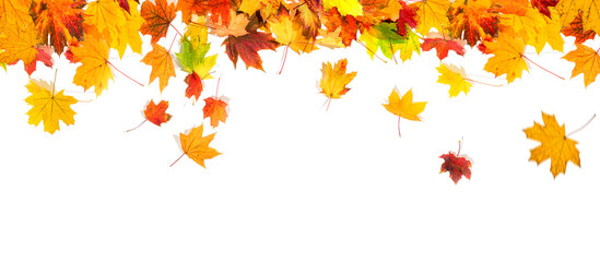 autumn leaves background Wall mural