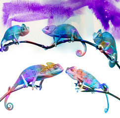 Fototapete - chameleons -  on a branch and colors