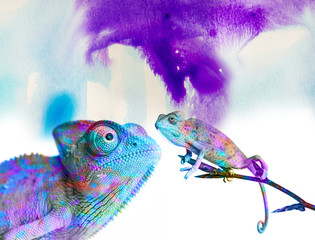 Fototapete - chameleons - and colors on white background