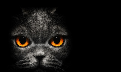 View from the darkness. Cat with orange eyes on a black background