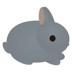 灰色のウサギ