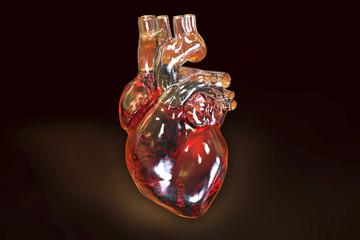 Human heart on dark background, 3D illustration