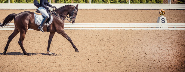 Black horse portrait during dressage competition. Dressage horse, advanced dressage test.