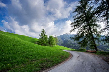 Beautiful green meadow at summer. Nature landscape