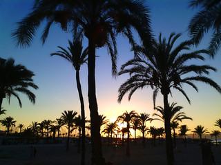 Sea with beach at sunset with palm trees