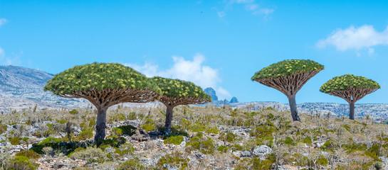 Beautiful nature of the Socotra Island, Yemen
