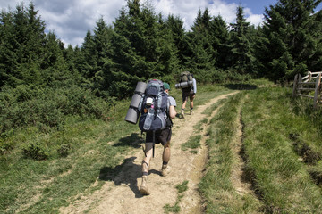 Tourists with backpacks are walking in the woods
