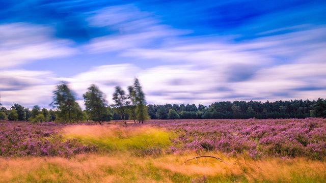 Lüneburger Heide. Behringer Heide