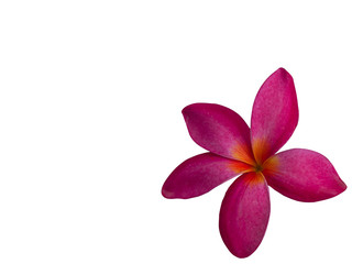 Frangipani Flower or Plumeria .(clipping path)