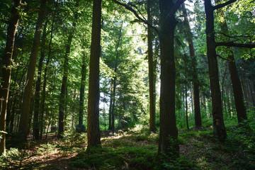 Wald im Sommerlicht