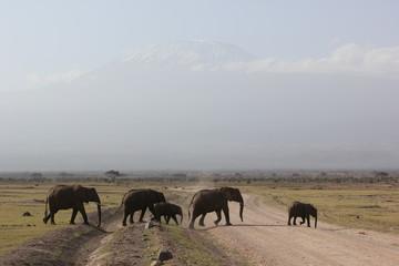Amboseli National Park Kenya Safari