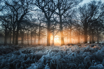 Frozen dawn. Sun rays stream through a frozen woodland, creating a magical winter landscape.