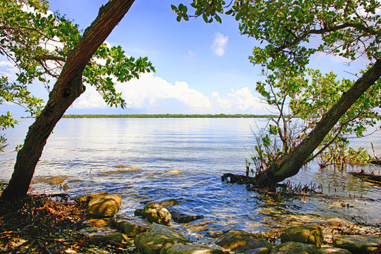 The swampland and Manatee River at the DeSoto National Memorial Park in Bradenton FL, USA
