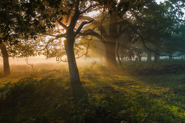 Woodland spirits. A magical scene, with sunlight streaming through the trees illuminating a deer with a crow on its back.