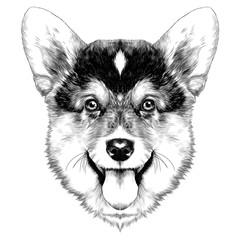 dog breed Welsh Corgi sketch vector graphics monochrome Christmas bump