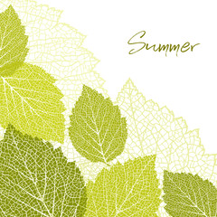 Summer background and leaves