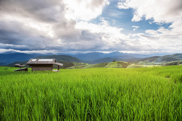bamboo hut in green terrace rice field with sun light