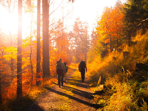 Group of backpackers trekking on the road in autumn forest.