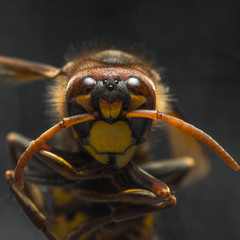 bee close-up on isolated background