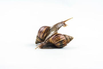 snails on white background  ,Can convey the love of young people or competition