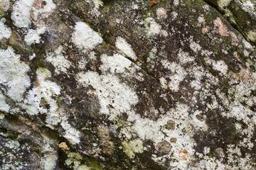 Moss & Lichen Covered Rock