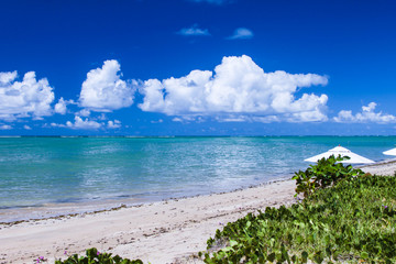 Bright scenic view of holiday paradise: northeast beach of Brazil, Alagoas state.
