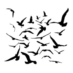 Seagulls black silhouette on white background. Vector