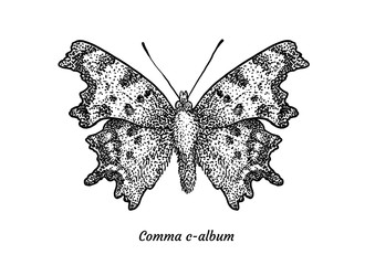 Comma butterfly illustration, drawing, engraving, ink, line art, vector