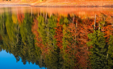 autumn forest reflection in lake