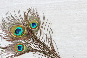 Peacock feathers background on stone