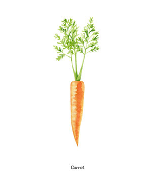 Handpainted watercolor poster with carrot