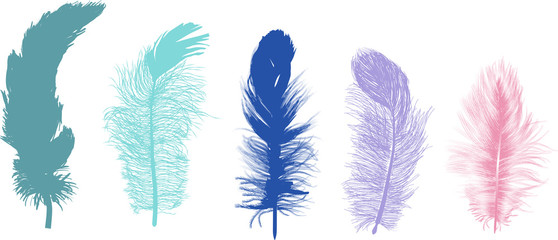 five fluffy color feathers isolated on white