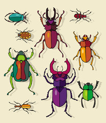 Set Insect Beetle