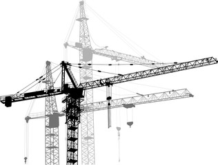 composition with three grey cranes on white