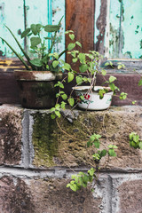 Decoration of house with plants in pots in shabby rustic style. Wooden and bricks grunge fasade