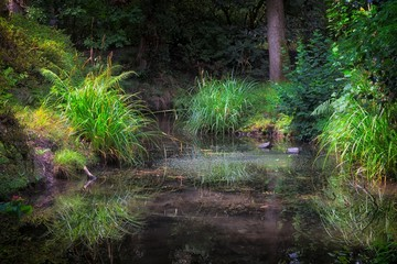 A small stream hidden by undergrowth in the popular Clyne park, Swansea, UK