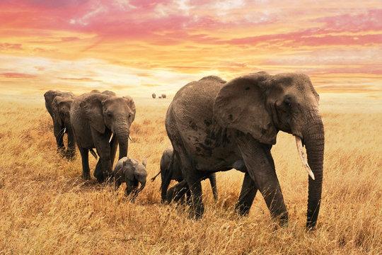 Familie Elefanten auf Pfad in Savanne