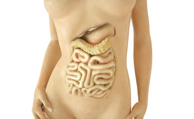Digestive tract part 02 of 03 - 3D Rendering