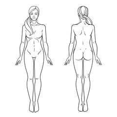 Female body front and back view template. Isolated vector image.
