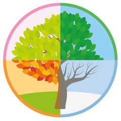 Four seasons tree in spring, summer, fall and winter arranged in a circle - tree throughout the course of a year with different foliage in typical colors and shades - vector illustration.